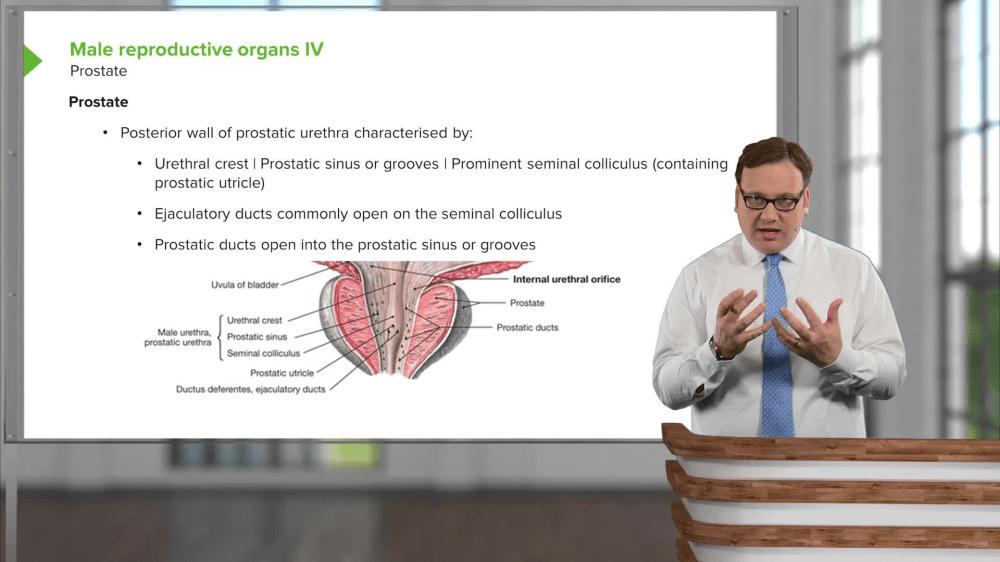 medium resolution of reproductive diagram quiz