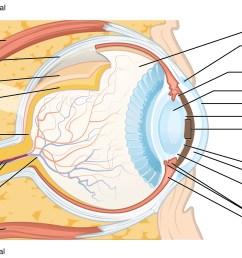 the sense of sight [ 2175 x 1242 Pixel ]