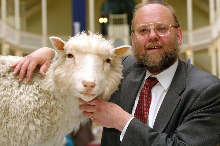 Resultado de imagen de oveja dolly