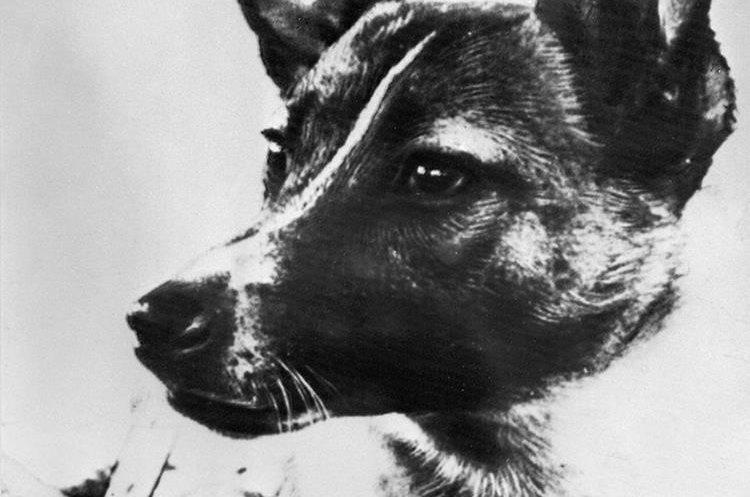 Foto de Laika tomada tres años y medio antes de lanzarla al espacio. (Foto Prensa Libre: AFP)