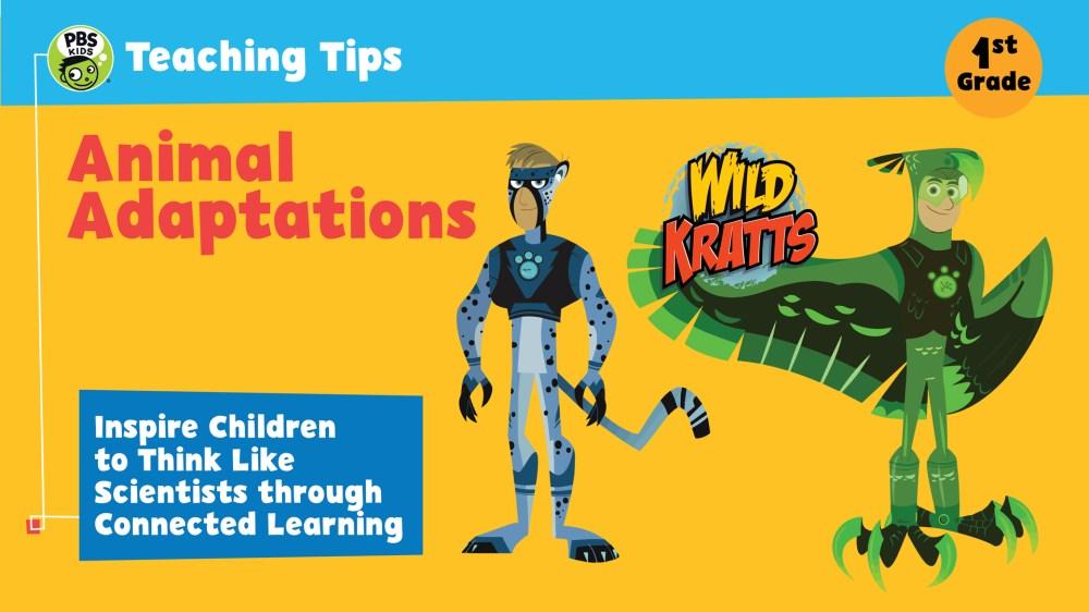 medium resolution of Animal Adaptations   Teaching Tips   PBS LearningMedia