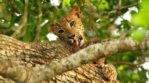 Sri Lanka - Whales and Leopards