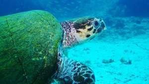 Galapagos - David Plummer Photography Tour
