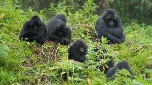 Rwanda & Uganda Wildlife Safari