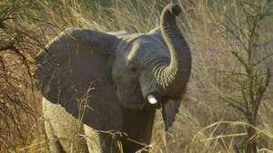 Zakouma, Elephants & The Nomads of Chad