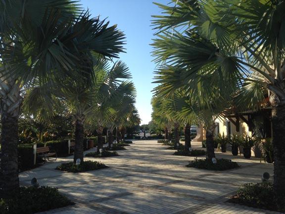 Naturepest Palm Tree Care Florida Naturepest 786 222 7069 Naturepest Blog