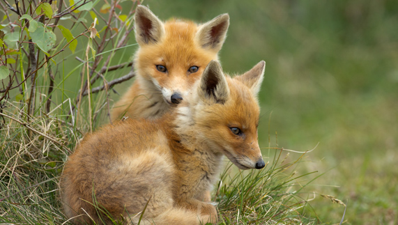 Image result for Ireland's wildlife national parks