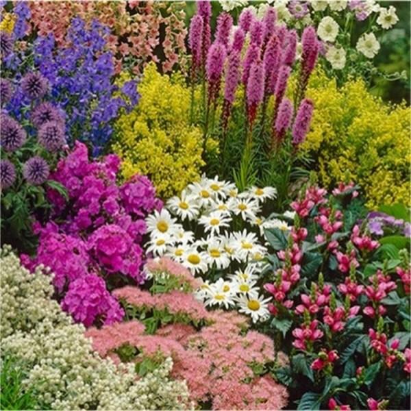 TEN Established Cottage Garden Plants Hardy Perennials