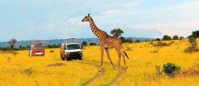 safari tour guide