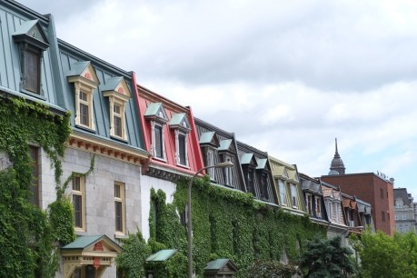 Ivy covered townhouses