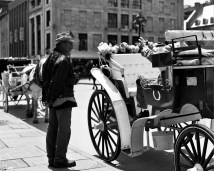 Portrait of a carriage driver