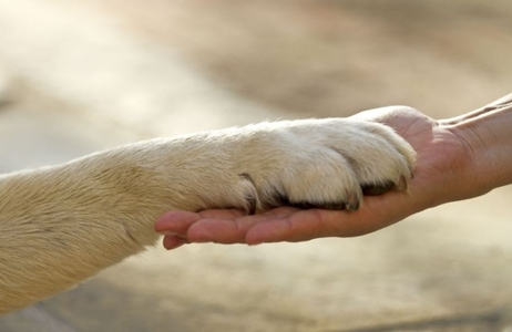 Reverse the decision to exclude animal sentience from the EU withdrawal bill