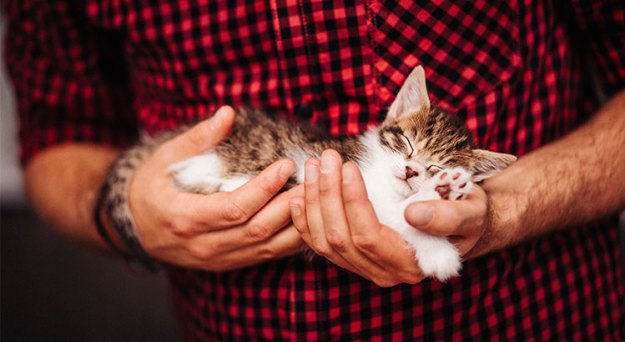 Selling Your Home? Is Your Listing 'Pet-Friendly'? | MyKCM