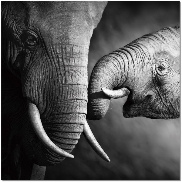 Black and White Elephant Wall Art