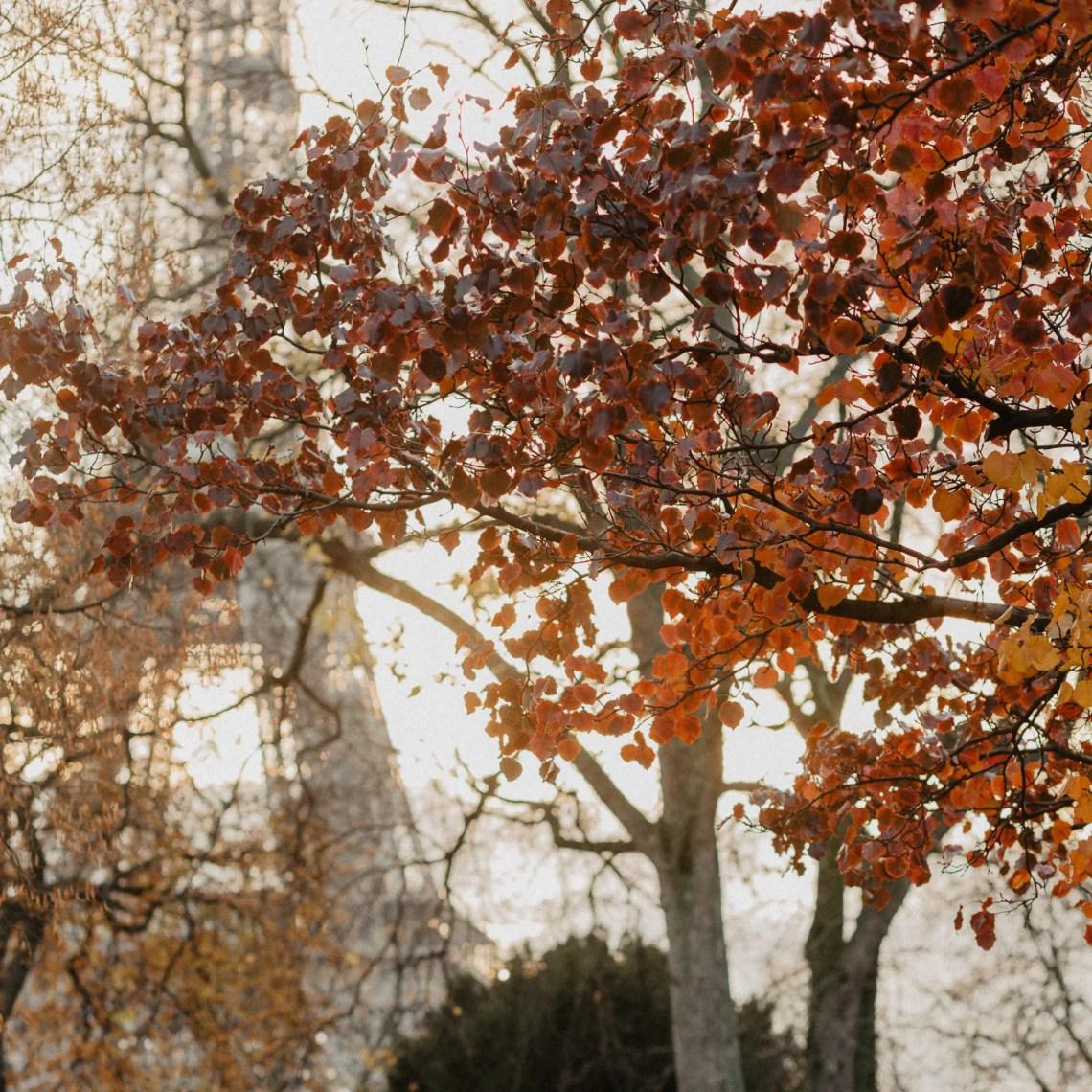 Paris autumn leaves