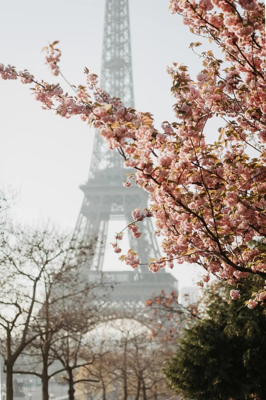 Eiffel spring cherry blossoms wedding photo