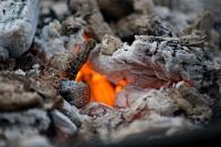 Garden Hacks With Fireplace Ashes | Tips, Gardening ...