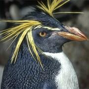 penguins - physical characteristics
