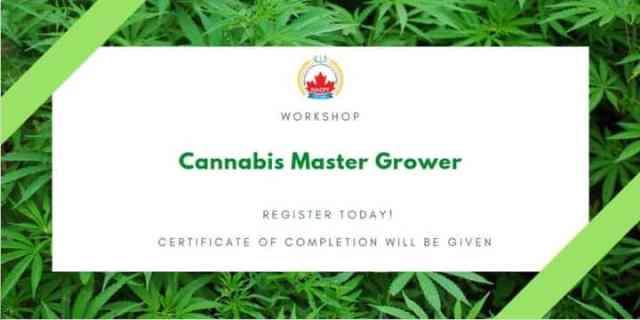 cannabis event grower canada 2019