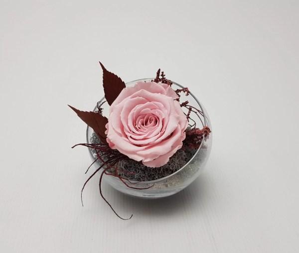 Mieganti roze stikliniame inde