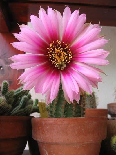 main_cactus11.jpg