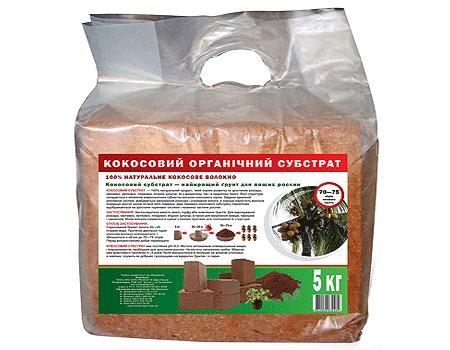 Как вырастить огурцы на подоконнике зимой в квартире. Как выращивать петрушку из семян на подоконнике зимой и ухаживать за ней