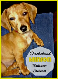 Your Wiener Wants a Dachshund Minion Costume (1)