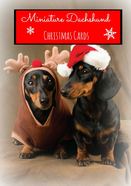 Best-Selling Miniature Dachshund Christmas Cards