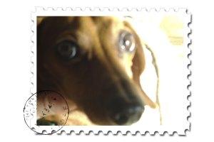 Dachshund-luke stamps
