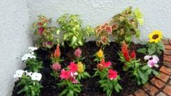 右側ミニ花壇