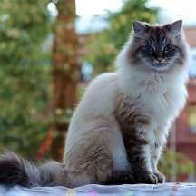 cat-ps-bsmooth-2880x2880-2