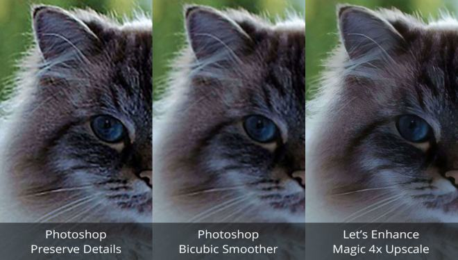 cat-side-by-side-comparison-1500x850