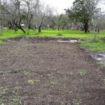 Daddykirbs Orchard Earthworks: Garden Area