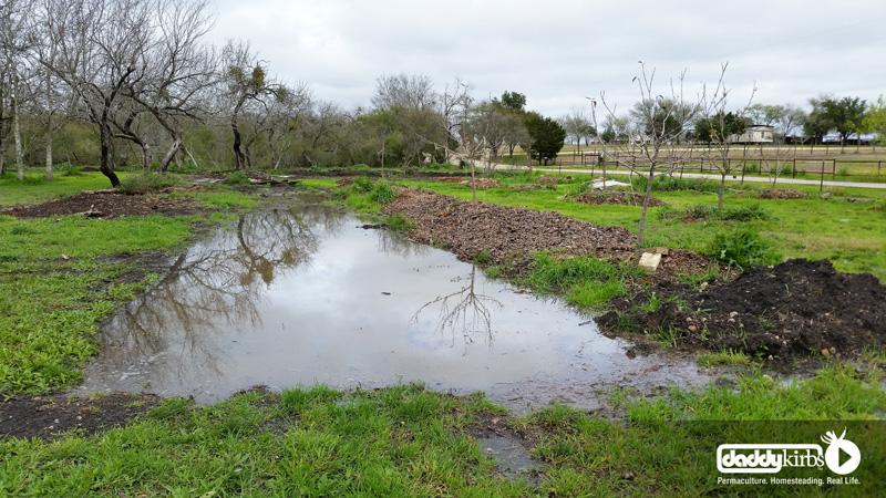 Daddykirbs Orchard Earthworks: Full Swales