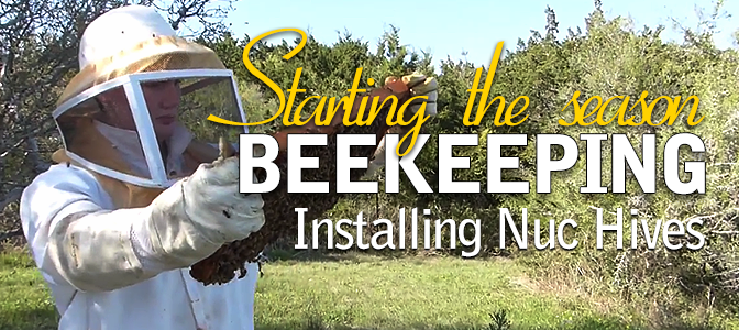 Installing four nuc hives to start the 2016 honey bees beekeeping season