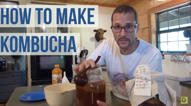 Make Kombucha – A How To Guide