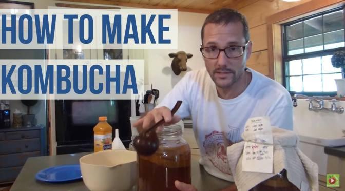 Make Kombucha – A How To Guide