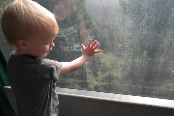 Toddler overlooking tree line.