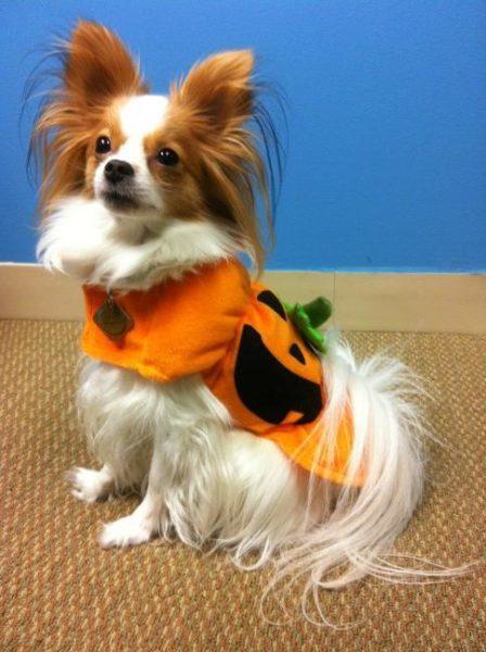 Phoebe_Halloween