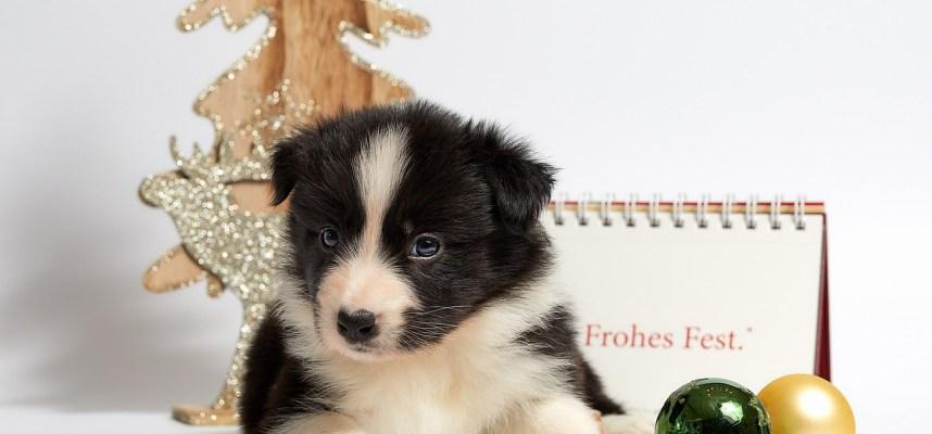 Cute Puppy - DPC