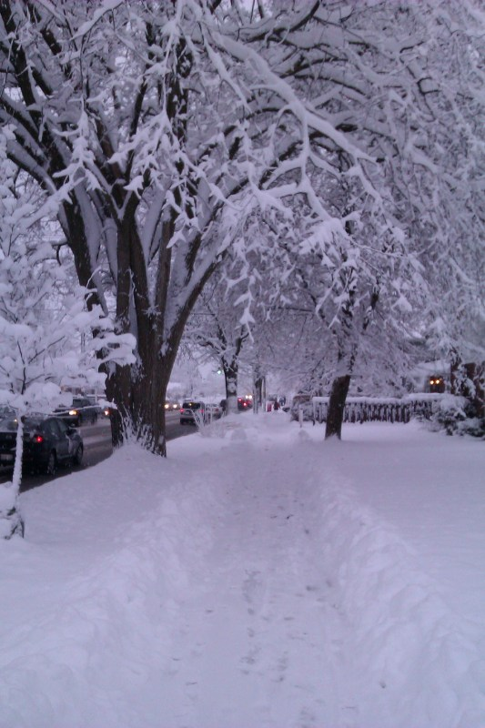 Image of snow covered trees leaning over the sidewalk like a tunnel