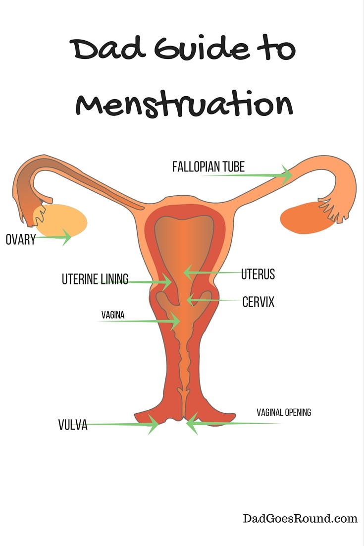Dad Guide: Menstruation
