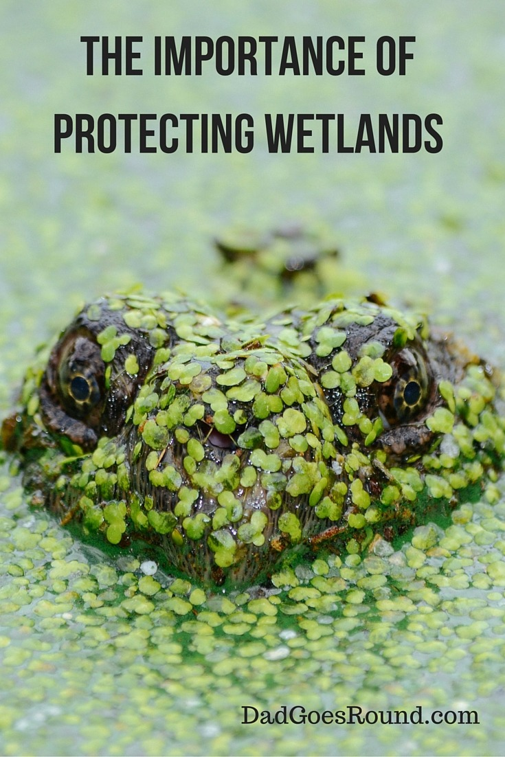 Protecting Wetlands | Canada contains 25% of the world's wetlands. It is important for our kids to learn about the value of protecting these ecosystems.