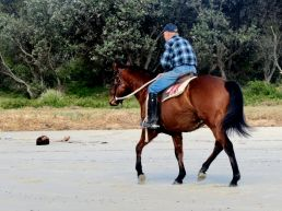 the horserider