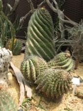 swirling cacti