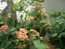 spiky stems for survival