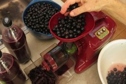 keeping the grapes up the the juicer