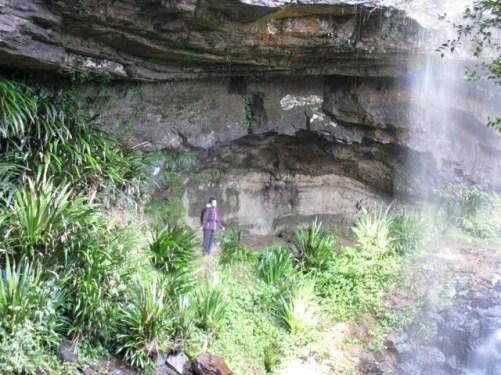 waterfall springbrook plateau qld