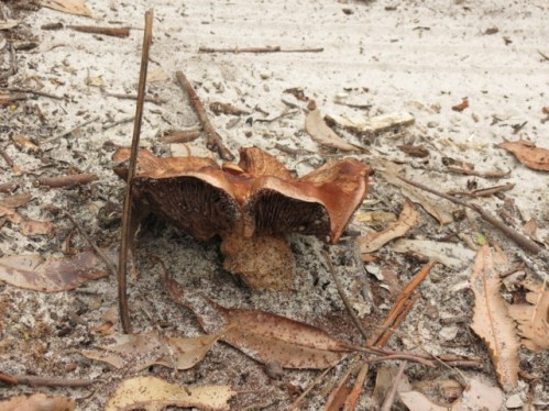 mushroom in the track