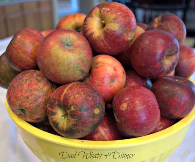 My Apple Harvest Bread is perfect to celebrate apple picking season.